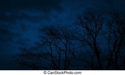 Bare Trees On Stormy Night - Tree tops sway in the wind in...