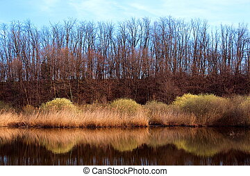Bare trees reflecting in a pond in spring