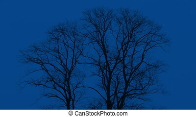 Bare Trees Sway At Night - Bare trees in the winter moving...