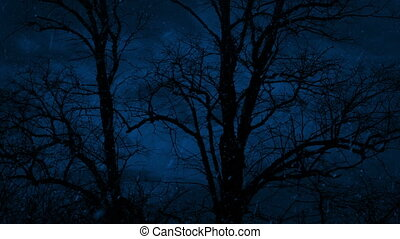 Bare Trees Sway In Snowfall At Night - Bare tree trunks...