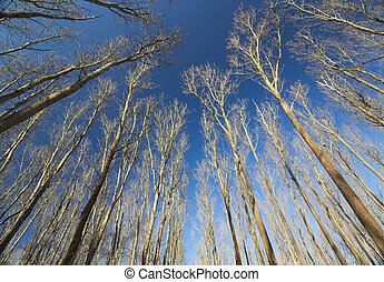 Bare Trees Under Dark Blue Sky