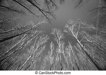 Bare Trees Under Dark Blue Sky In Black And White