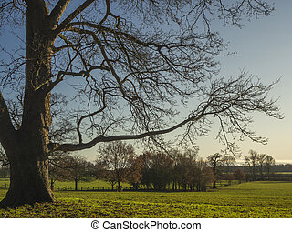 Bare winter tree in a North Yorkshire park, England