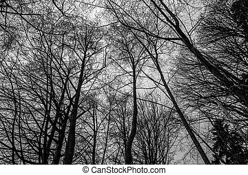 Bare Winter Trees 2