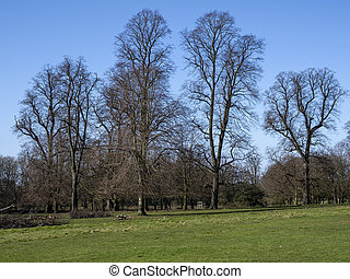 Bare winter trees in a park with a blue sky