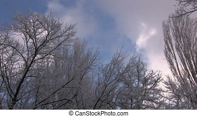 Bare winter trees with frozen twig