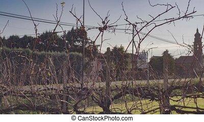 Bare winter vineyard detail in Italian Plain