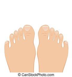 barefoot., ベクトル, 上, イラスト, 女, ビュー。