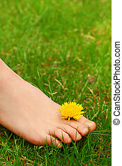 Closeup on young girl's bare foot in green grass with a dandelion
