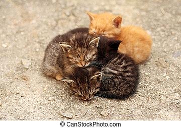 barevný, jinak, čtyři, koty, spací, naházet páté přes deváté, dohromady