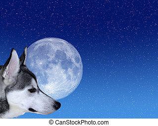 Bark at the Moon - Siberian Husky looking at moon on starry ...