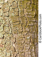 Bark Background Texture Pattern