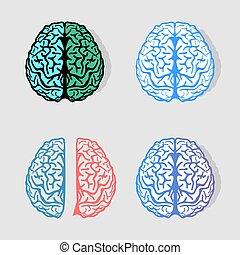 bark, elements., anatomi, lysande, vetenskaplig, vektor, färgrik, hemispheres., förstånd, intelligens, labels., logotypes., symboler, medicinsk, logos., sätta, neurobiology, grupp, kollektion, signs., illustration.