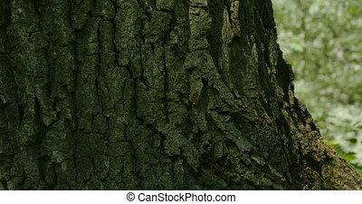 bark huge tree camera in motion
