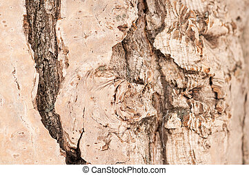 Bark of a trunk