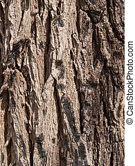 Bark of an old dark grey tree