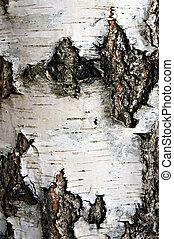 Bark of birch tree.