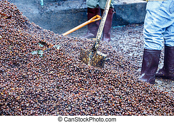 Bark of Coffee bean for make fertilizer