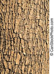 Bark of Elm tree