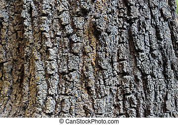 Bark of large trees in the forest.