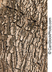 Bark of the Tree texture Background