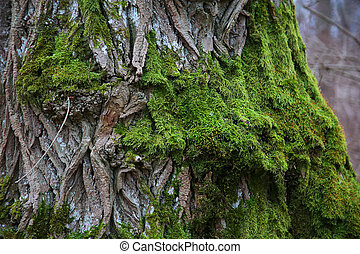 bark of tree covered with green moss