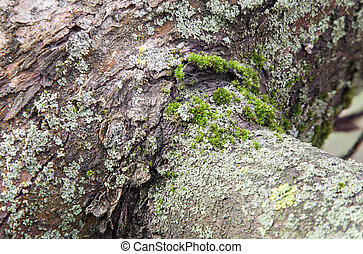 Bark of tree covered with moss