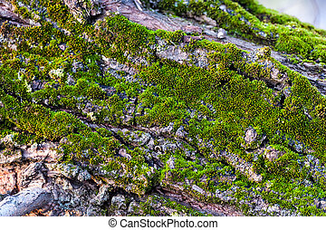 Bark of tree with moss