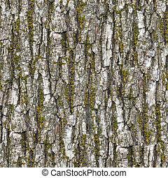 Bark. Seamless Texture. - Bark Seamless Tileable Texture.