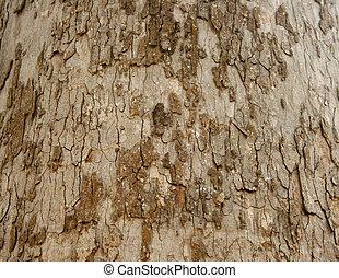 Bark Seamless Tileable Texture
