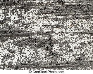 bark texture #2