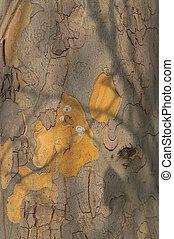 Bark Texture - Bark texture detail