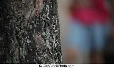 Bark Tree against Blurry Playground Children - Vertical pan...