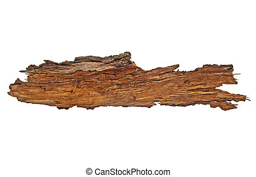Bark tree isolated on a white background