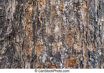 Bark wood texture