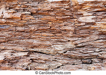 bark wood texture background