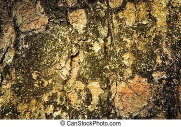 Bark wood tree texture background
