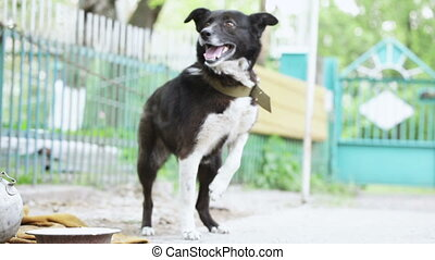 Barking dog - Dog on a chain barks, escapes and returns