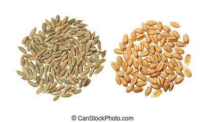 Barley and Wheat - Cereal grains seeds barley, rye and wheat...