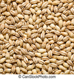 barley background, overview top close up