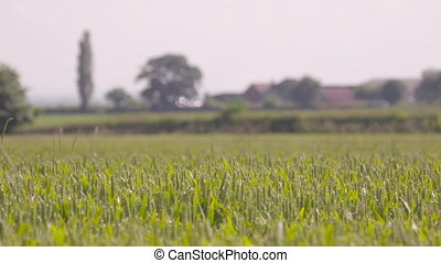 Barley Farm | Electricity Cables, Derbyshire, UK - Wide low ...