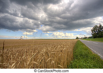 Barley field with country road and village in Bavaria, Germany