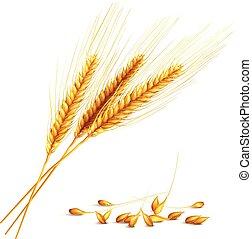 Barley Grain Illustration