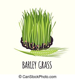Barley grass icon in flat style isolated on white. - Barley...