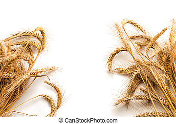 Barley macro. Whole, barley, harvest wheat sprouts. Wheat grain ear or rye spike plant isolated on white background, for cereal bread flour. Element of design.