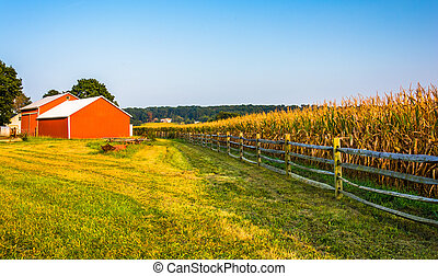 Barn and corn field on a farm in rural York County,...