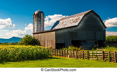 Barn and corn fields on a farm in the Shenandoah Valley,...