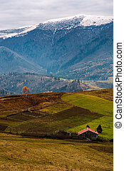 barn and lonely tree on hillside in high mountains -...