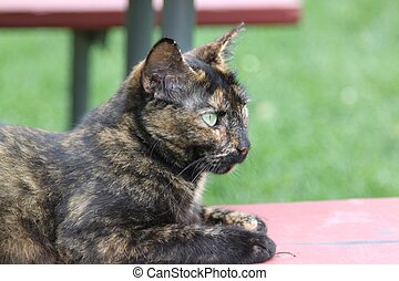Barn cat with light green eyes - Profile of the black brown...