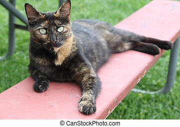 Barn cat with light green eyes - This barn cat lays outside...